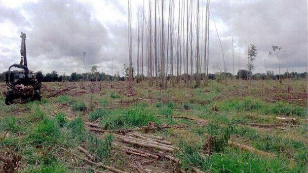 trator e eucaliptos cortados no sul da Bahia