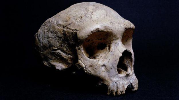 Crânio fossilizado de um neandertal