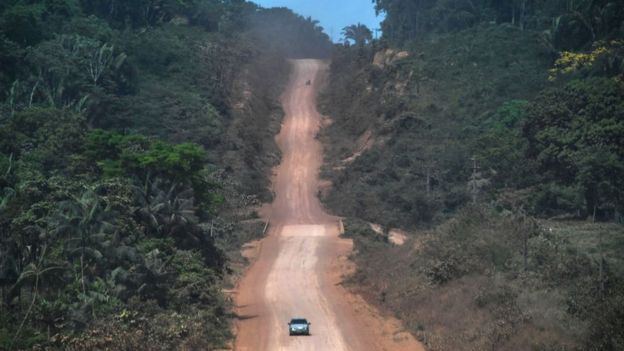 Road through the rainforest