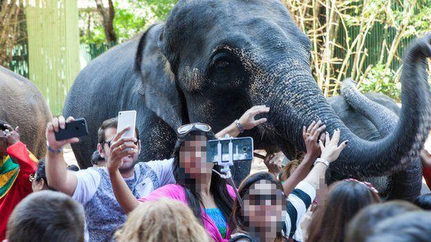 Elephants and selfies