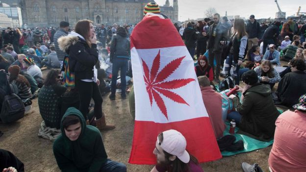 Cannabis users in Canada