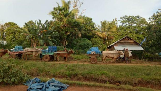Surat-surat suara dikirimkan ke daerah pedalaman di Kecamatan Bengkunat, Lampung Barat, dengan gerobak sapi.