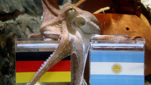 الأخطبوط بول صاحب النصيب الأكبر من التوقعات الصائبة عن نتائج مباريات كأس العالم