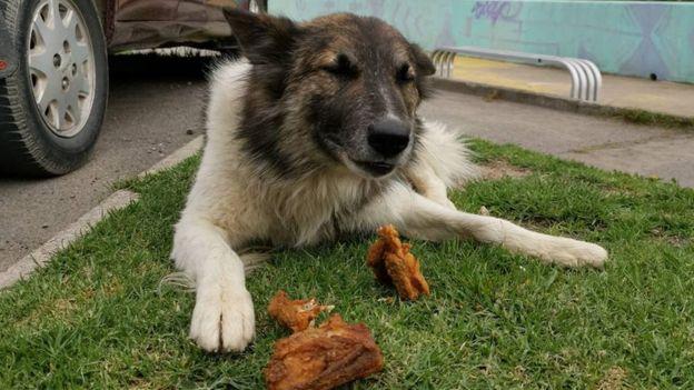 Uno de los animales a los que Ferchy lleva alimentos.