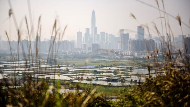 从香港边境田野眺望深圳的摩天大楼(资料图片)
