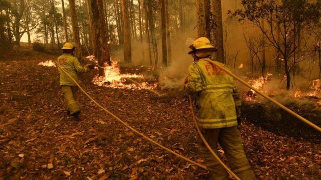 bombeiros da Austrália tentando apagar incêndio florestal
