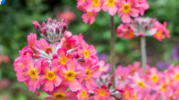 Flowers in bloom at Royal Botanic Garden in Edinburgh