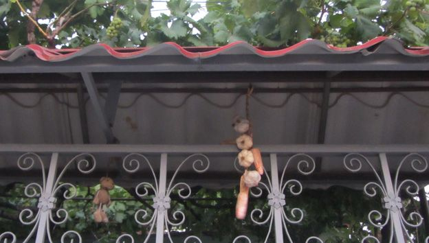 Stuffed toy and vegetables hanging from roof
