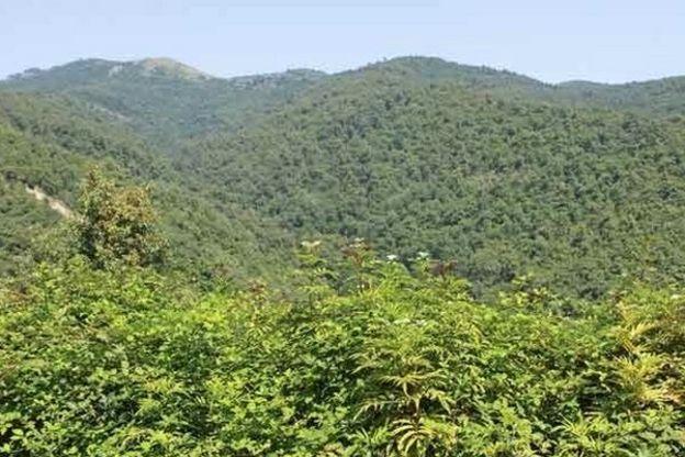 هفته گذشته واگذاری بیش از پنج هزار هکتار از زمینهای جنگل سفید باعث انتقاد گسترده شد