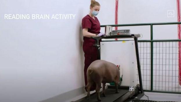 Video de presentación de Neuralink.