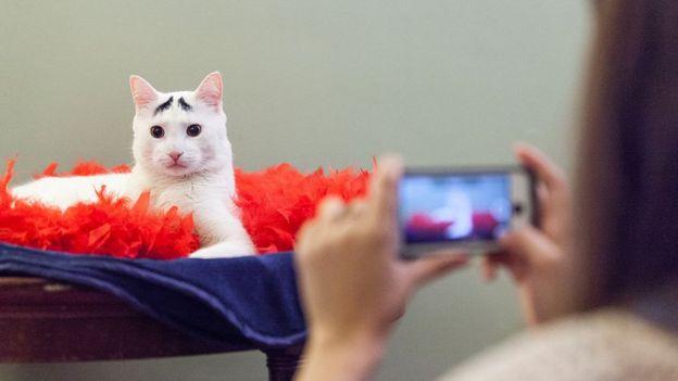 Este gato se hizo viral a través de Instagram