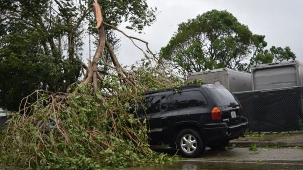 Auto aplastado por un árbol