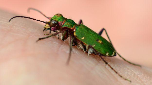 Biodiversity: 'Beast of Beddau' is new millipede find - BBC News