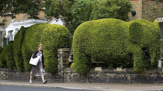 Экологи: живая изгородь очищает воздух в городах лучше деревьев