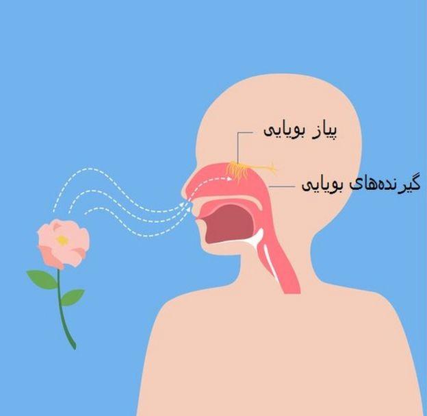 بویایی