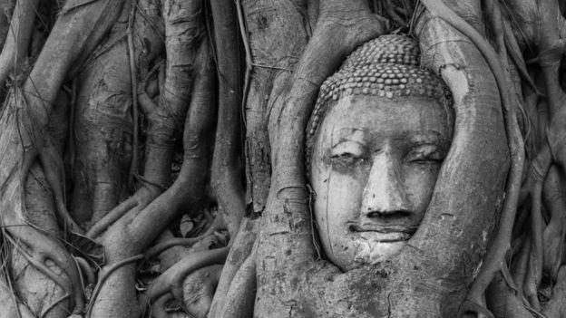 Un árbol de higo con una escultura tallada
