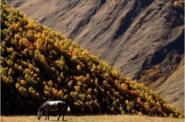 有人说,金卡里起源于第比利斯北部崎岖的山区。