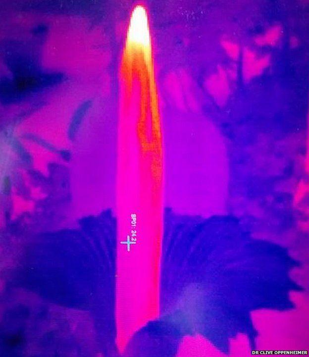 Thermal image of titan arum