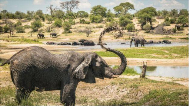 博泰蒂河流域是许多非洲雄象的聚集地。