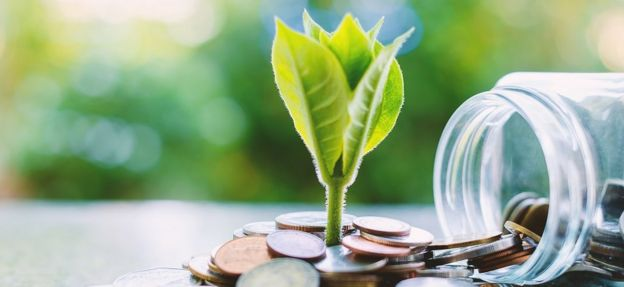 planta y dinero