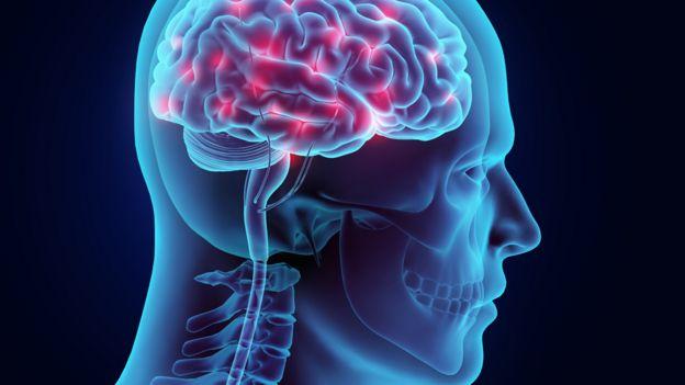 Ilustración de un cerebro y médula humanos