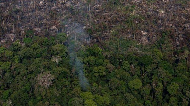 Экологи обвиняют Жаира Болсонару в уничтожении лесов Амазонии
