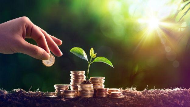 Muda de planta perto de pilhas de moedas