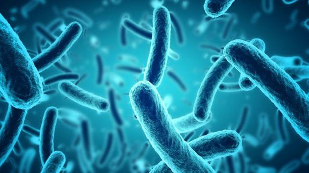 Ilustración de bacterias
