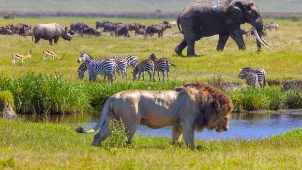Animais selvagens, como leão, elefante e zebra