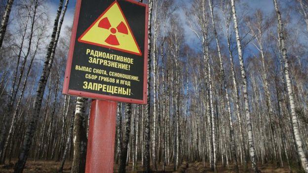 Derechos de autor de la imagen GETTY IMAGES / Image caption / Está prohibido ingresar a vastas áreas de Ucrania y Bielorrusia por la contaminación radiactiva, pero la vida vegetal allí está floreciendo.