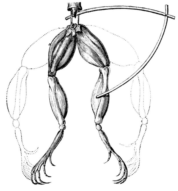 An illustration of Galvani's experiment, which saw frogs' legs twitch when touched with electrodes