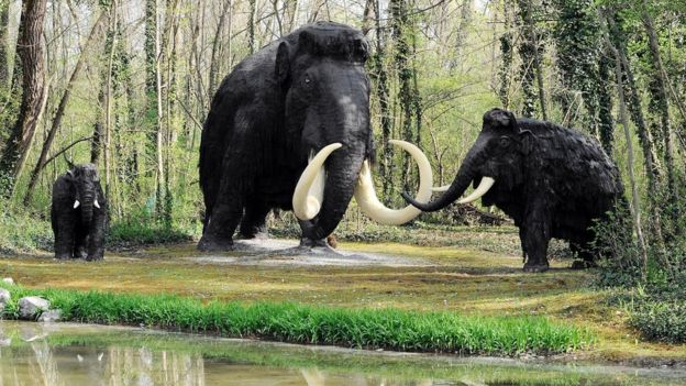 A14 road workers find woolly mammoth bones - BBC News