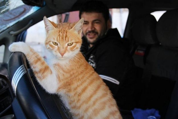 _105920673_alaa-cat-man-and-ernesto976 - Return of the cat man of Aleppo - Inspiration & Hope