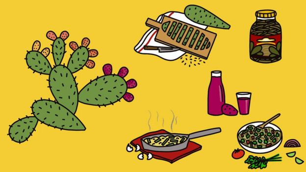Ilustración usos del nopal.