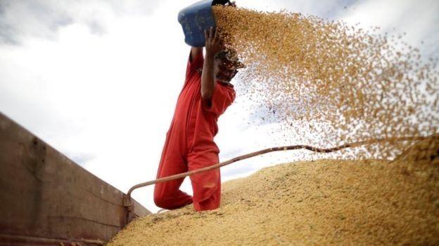 Produção de soja