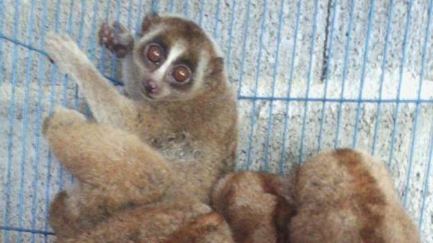 facebook animal trade exposed in thailand bbc news