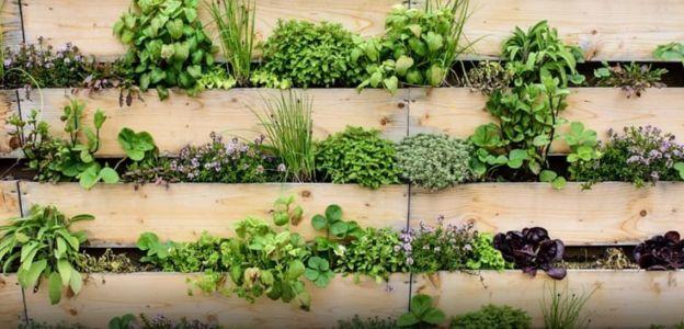 گیاهان مغز ندارند ولی حتی بدون داشتن مغز و یا یاختههای عصبی کارهای زیادی میتوانند انجام دهند که ما برای آن به مغز و اندامهای حسی احتیاج داریم