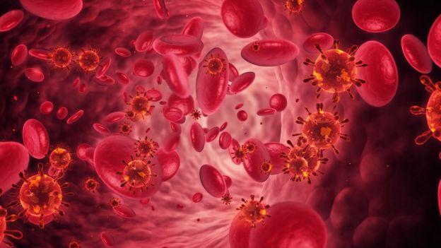 Ilustración de glóbulos rojos.