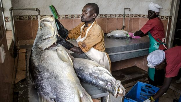 Workers at Victorian Foods clean Nile perch fish ahead of removing the skin