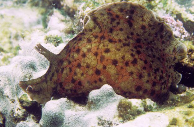 เซลล์ประสาทของมนุษย์และหอยทากทะเล Aplysia californica มีกลไกการทำงานที่คล้ายคลึงกันในหลายด้าน