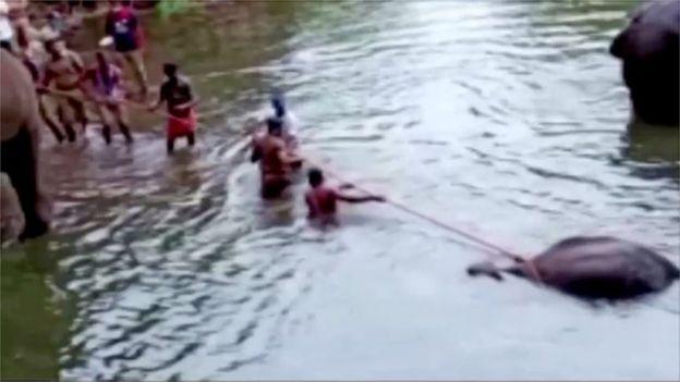 Hombres intentan ayudar a una elefanta