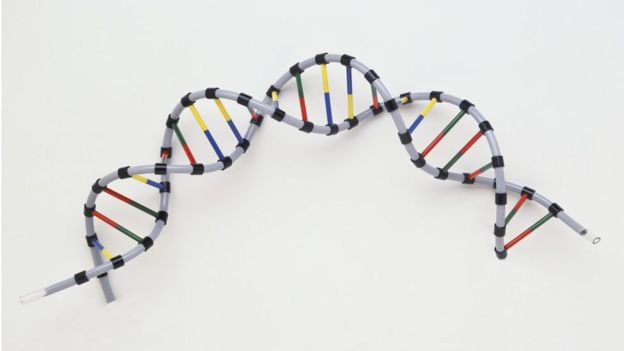 人类DNA双螺旋结构