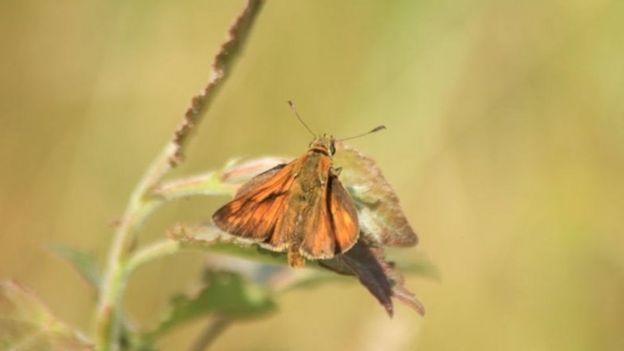دمای بدن هزاران پروانه در بریتانیا اندازه گرفته شد