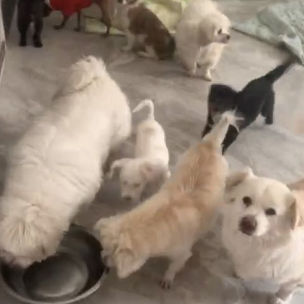 Images of dogs inside a volunteer's house