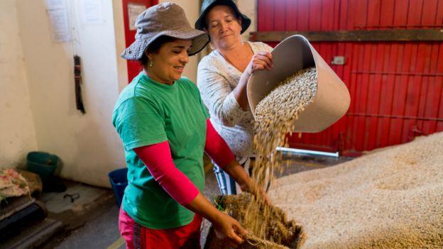 Mujeres trabajando con granos de café en Colombia