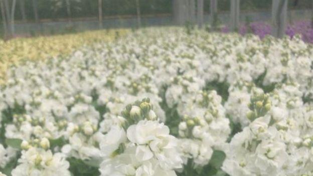 flowers in boom