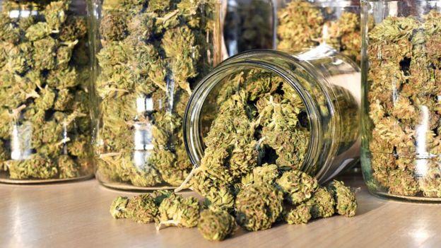 Cannabis seca, armazenada em potes de vidro