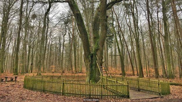 Escada de 3m de altura leva ao pequeno buraco na árvore