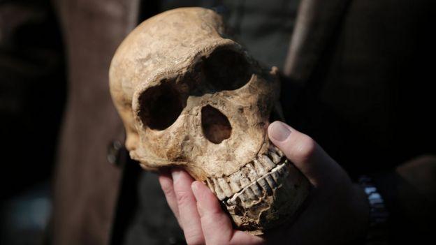 جكجمة انسان من نوع هومو سابينس