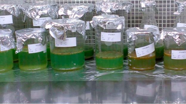 Amostras dos exames de fezes dos participantes do estudo sobre a presença de microplásticos em humanos